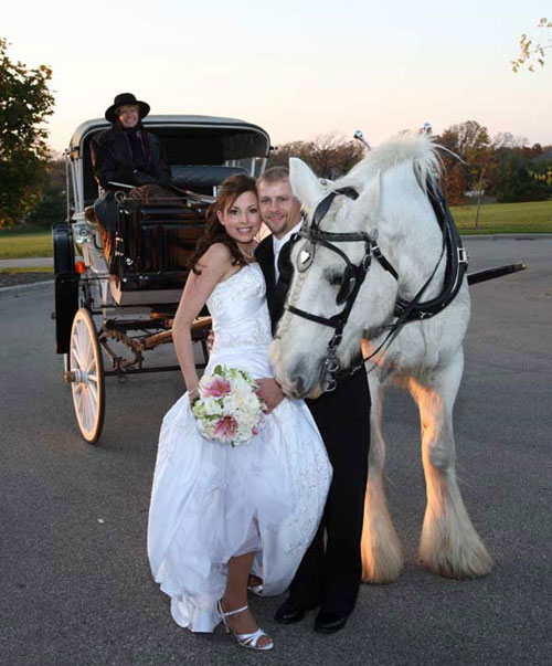 Horsedrawn Wedding Day